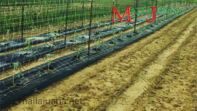 Tomatoes cultivation with MALLAJUANA tutoring system